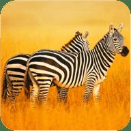 非洲斑马模拟器2021版