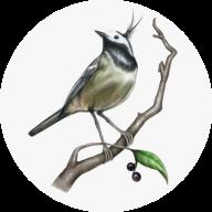 青鸟辅助平台接单版appv1.2.2无限拉新赚钱版