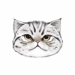 qq飞车cat辅助卡密破解版v2.0虚拟框